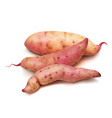 realistic sweet potato set on a white background vector image