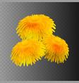 stock realistic dandelions vector image vector image
