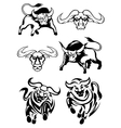 Black and white bulls or buffaloes vector image vector image