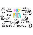 panda family set vector image