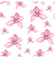 pink purple tender orchid phalaenopsis floral vector image vector image