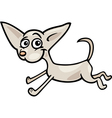 running chihuahua cartoon vector image vector image