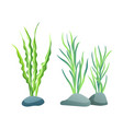 seaweed for aquarium sketch vector image