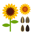 Sunflowers and seeds symbol vector image vector image