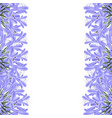 blue purple agapanthus border - lily of the nile vector image vector image