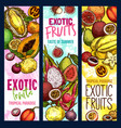 exotic fruits tropical fruit sketch banners vector image vector image