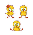 flat cute chicken chick set vector image