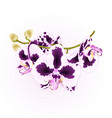 branch orchid flowers spots purple and white vector image vector image