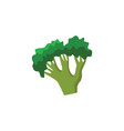 flat broccoli icon vector image
