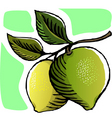 guava vector image vector image