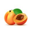 half and whole peach fruit vector image