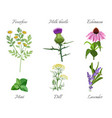 milk thistle and feverfew medical herbs set vector image