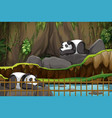 scene with two pandas at zoo vector image vector image