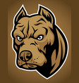 pitbull head vector image