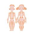flat structure human body anatomy skeleton vector image