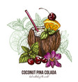 coconut pina colada with orchid flower vector image vector image