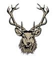head deer vector image vector image