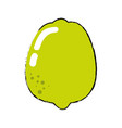 lemon fruit food vector image vector image