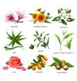 medicinal plants and flavors magnolia calendula vector image vector image