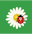 red ladybird on a camomile flower vector image