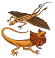 frilled-necked lizard flying dragon or agama in