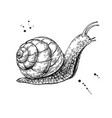 snail drawing hand drawn isolated sketch vector image