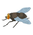 colorful housefly musca domestica vector image
