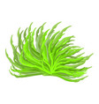 algae symbol icon design beautiful vector image vector image