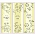 Floral decorative botanical banner vector image