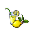 lemonade glass with straw lemon slice vector image