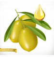 olives and drop of oil 3d realistic icon vector image