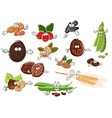 Cartoon nuts beans seeds and wheat vector image vector image