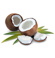 Coconut tropical vector image vector image