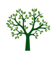 green tree with leafs vector image