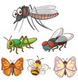 isolated picture many bugs vector image vector image