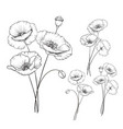 vintage poppy set vector image vector image