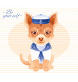 summer fashion chihuahua puppy dog in sweet sailor vector image
