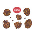 collection hand drawn pine cones vector image