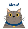 cute cartoon gray cat icon meow vector image vector image