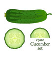set of cucumber and slices vector image