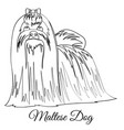 maltese dog coloring vector image