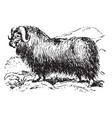 musk ox vintage vector image