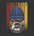 bulldog urban retro vector image