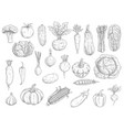 farm vegetables sketches isolated icons vector image