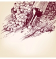 grapes with a bottle of wine vector image