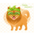 summer fashion pomeranian spitz puppy dog in sweet vector image vector image