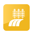 Ears Wheat Barley or Rye Field icon Farm vector image
