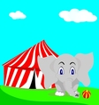 elephant circus vector image vector image