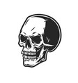 scary human skull vintage concept vector image vector image