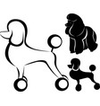 silhouette a dog poodle vector image